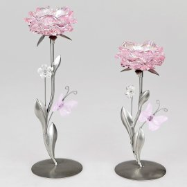 Leuchter Blüte rosa